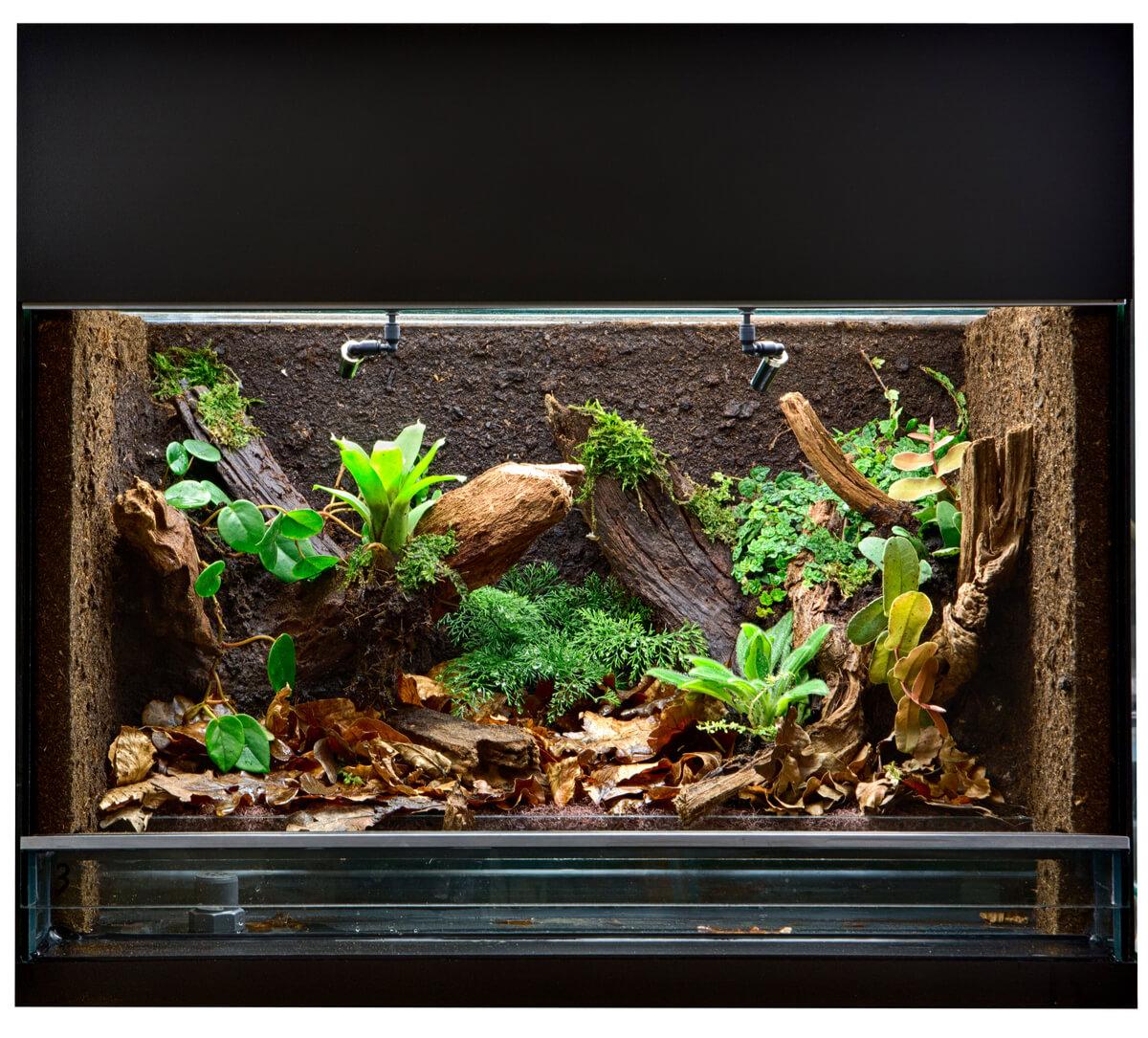 Terrarium voor spinachtigen