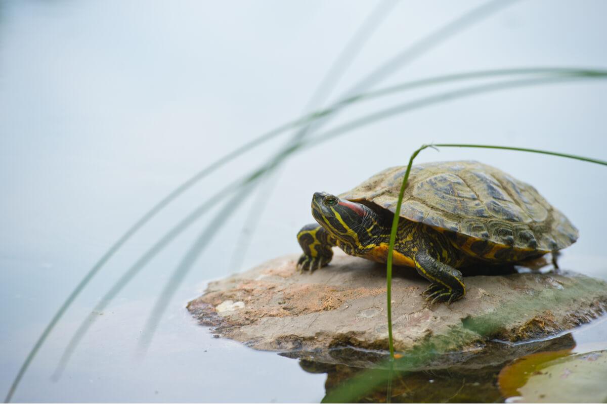 Una tortuga en un ambiente natural.