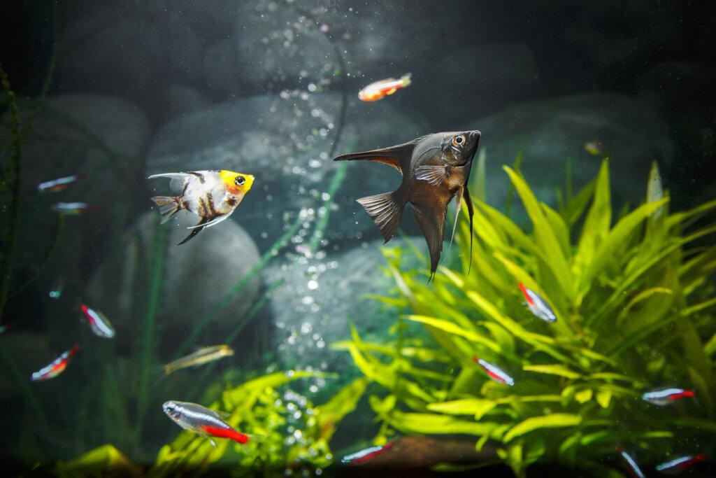 Causas de la espuma en acuarios