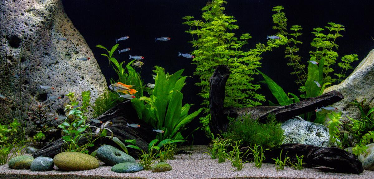 Un acuario con peces.