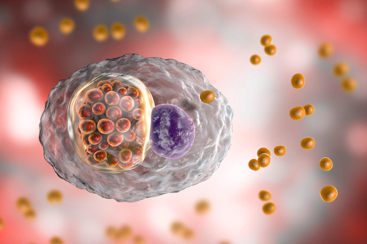 Una bacteria causante de la ornitosis invadiendo una célula.