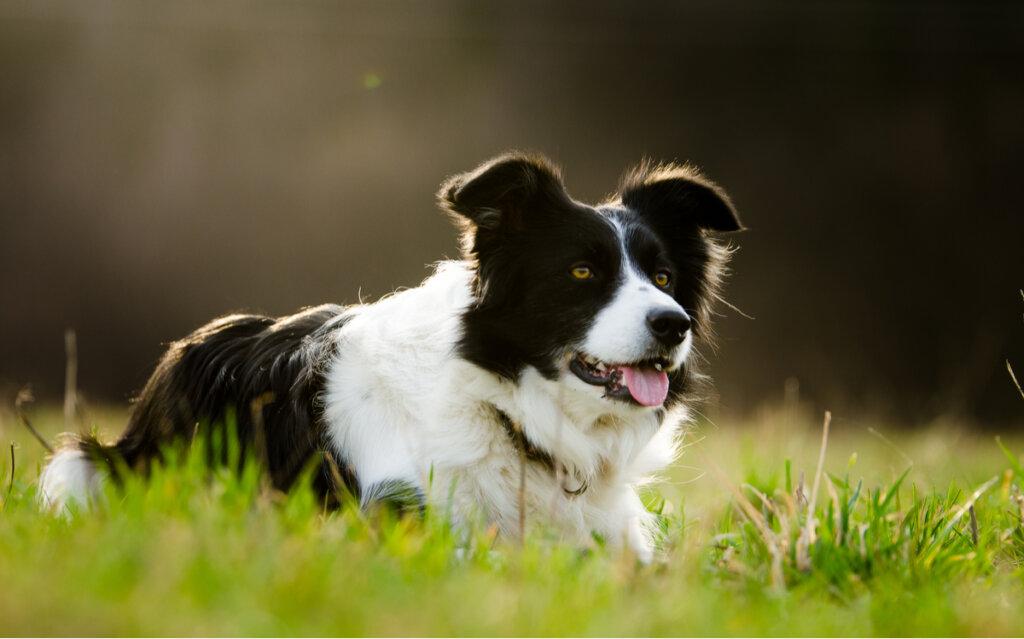 ¿Cuáles son las razas de perros más populares del Reino Unido?