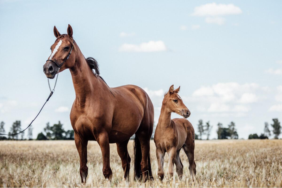 Diagnóstico y manejo de tumores en caballos