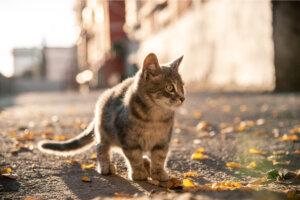 ¿Por qué los gatos quieren escapar de casa?