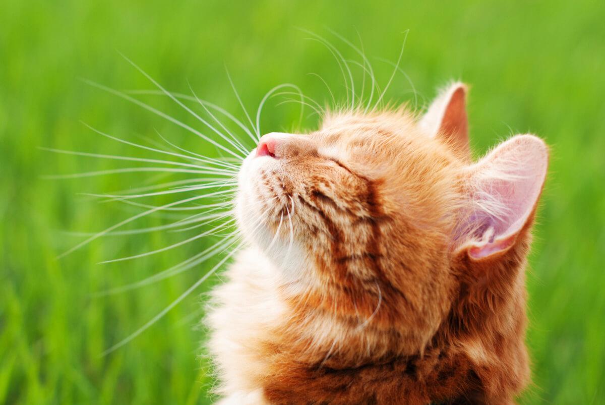 Un gato al sol en un patio.