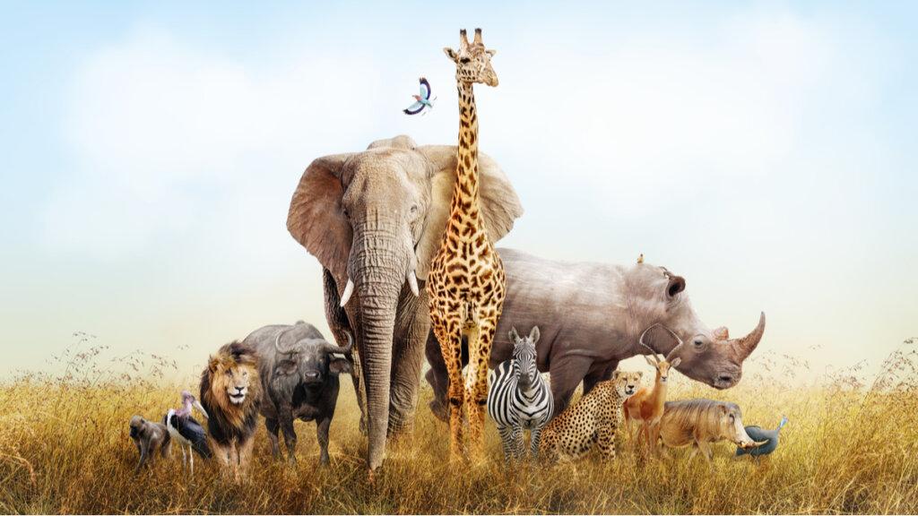 Los zoológicos en la actualidad: ¿sabemos qué son y cómo funcionan?