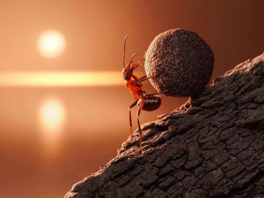 ¿Cuánto peso puede cargar una hormiga?