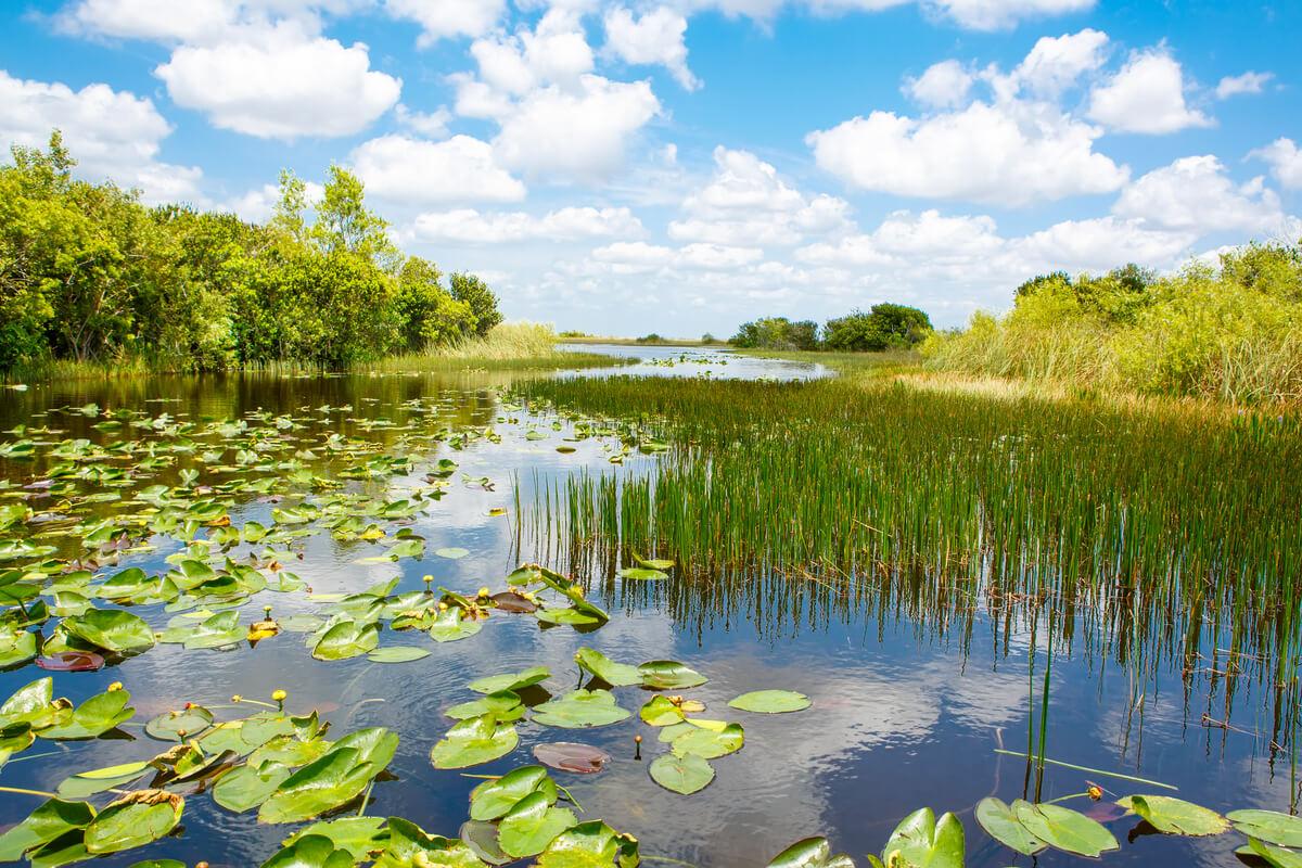 Los humedales presentan grandes concentraciones de agua.