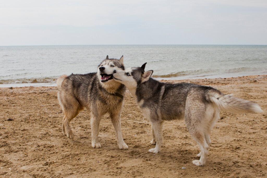 Enfermedades de Transmisión Sexual en perros: ¿cuáles son las más comunes?