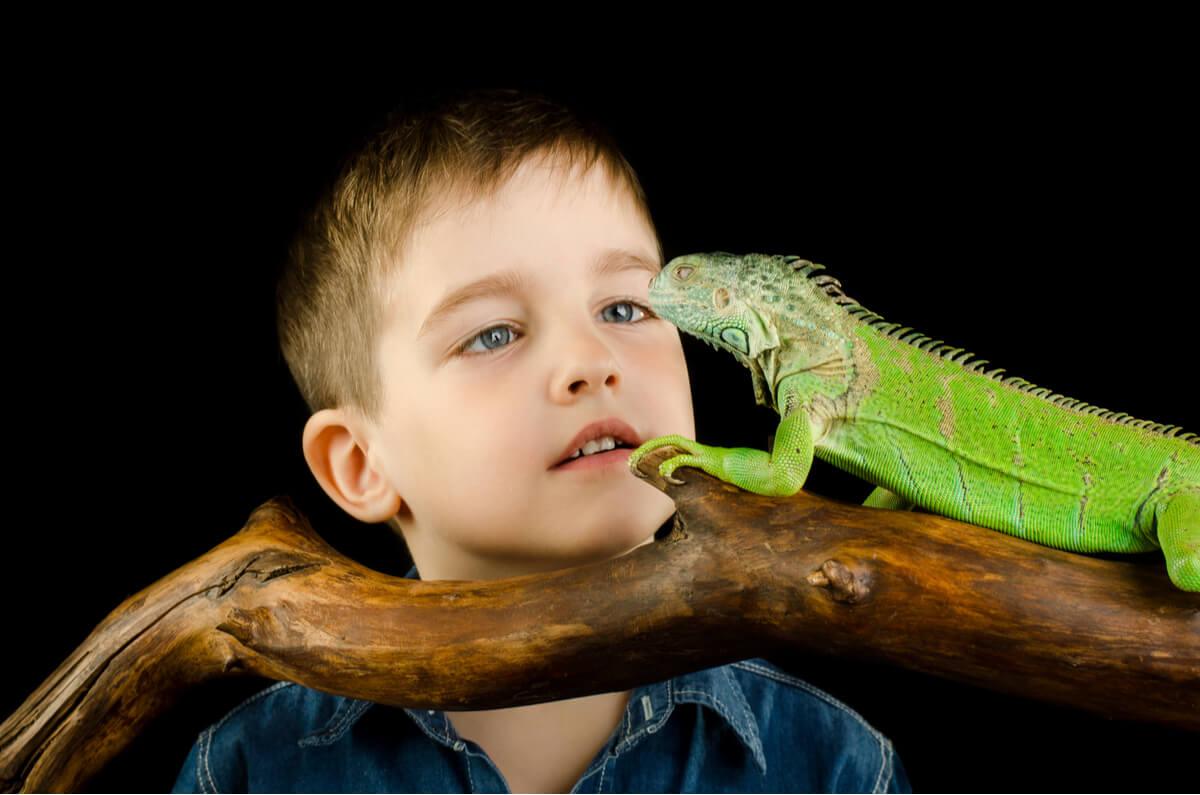 Tu reptil o anfibio exótico puede causarte salmonelosis