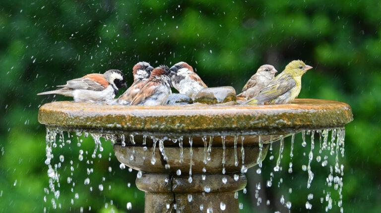 El estrés térmico: un problema emergente para las aves
