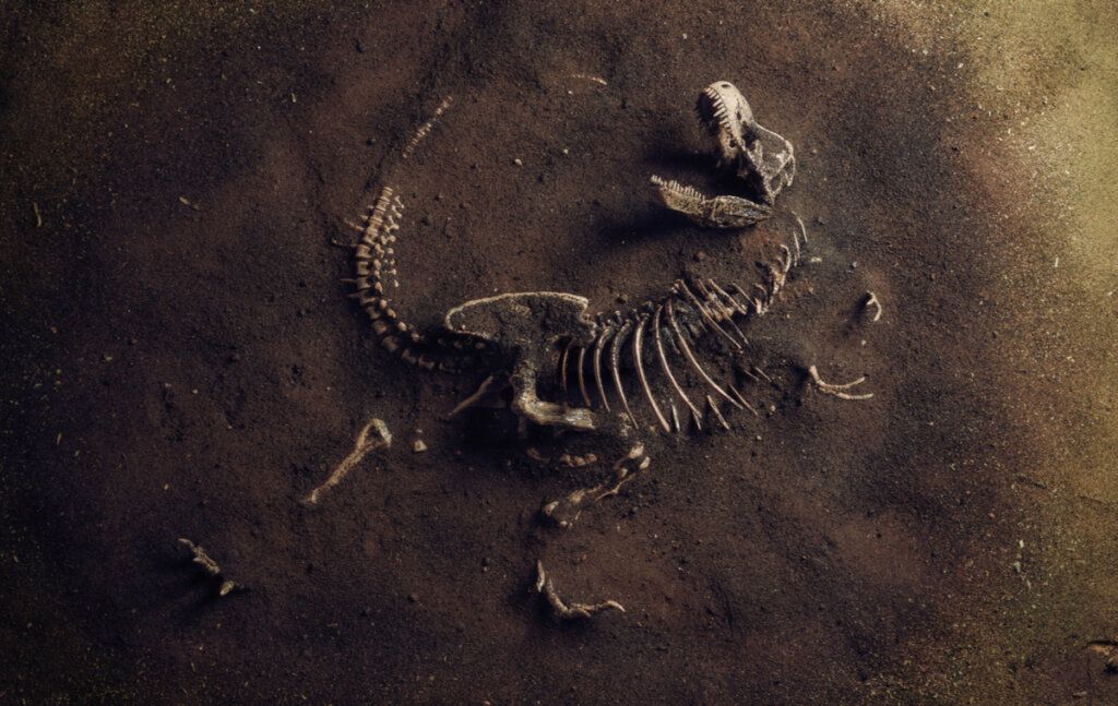 ¿Qué es la paleoecología?