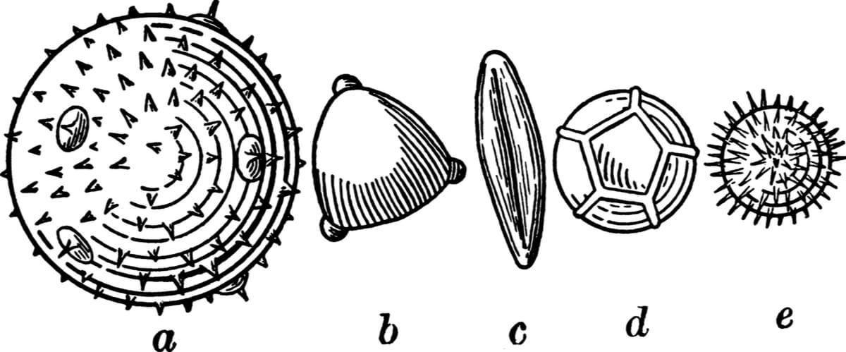 La palinología es esencial para la paleoecología.