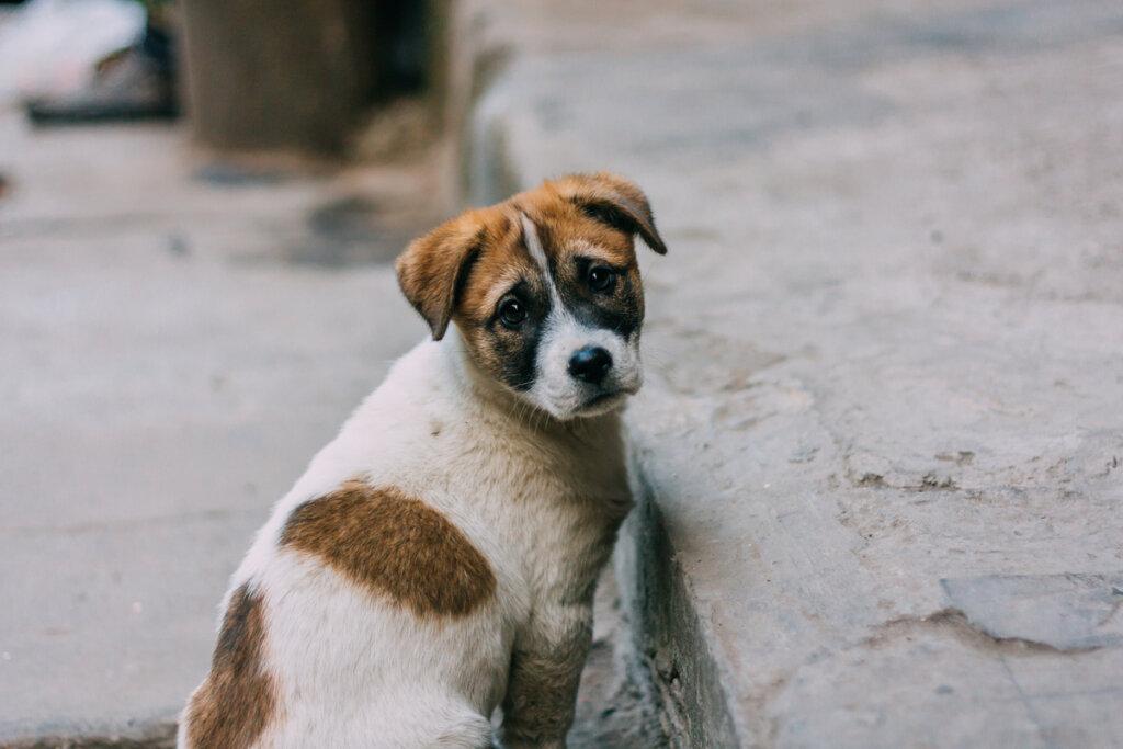 La mitad de los perros que se regalan en navidad son abandonados