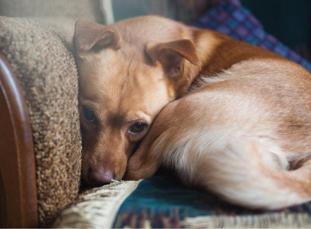 Este estudio revela que más del 72 % de los perros tienen ansiedad