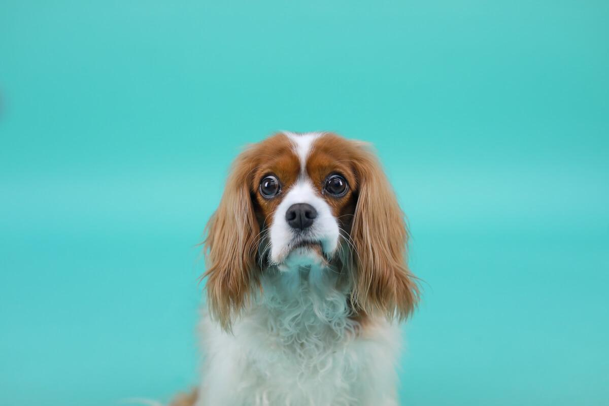 Un perro con cara de confusión.