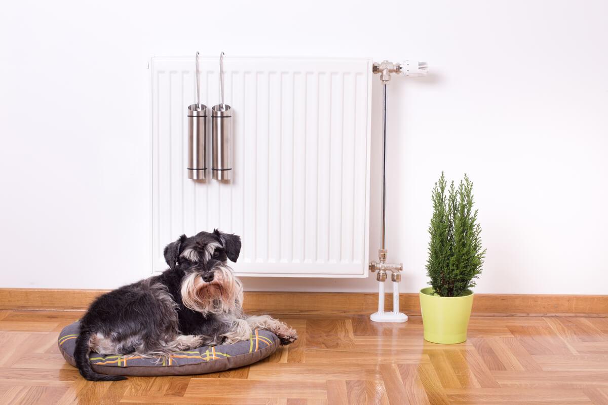 Se pueden hacer muchos juguetes reciclables para perros.