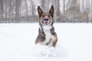 ¿Qué hacer con los cambios de temperatura en perros?