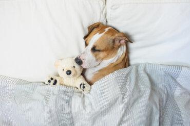¿Cuánto debe dormir un perro?