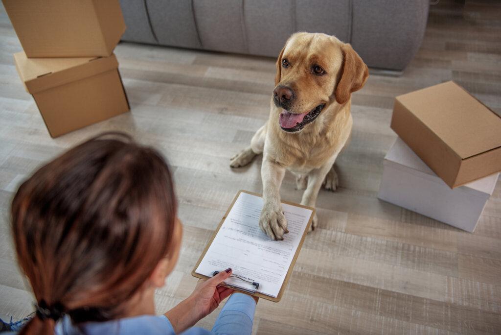 El gobierno plantea un DNI obligatorio para animales domésticos en España