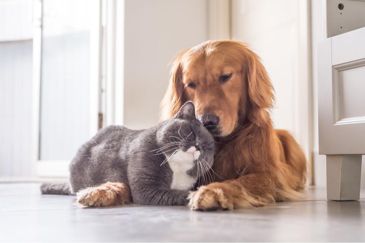 La convivencia entre el perro y el gato es posible.
