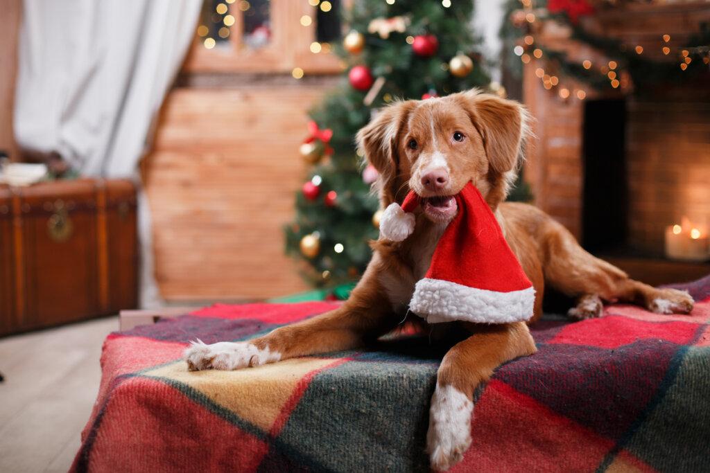 ¿Cómo puede relajar la música a los perros en las festividades?