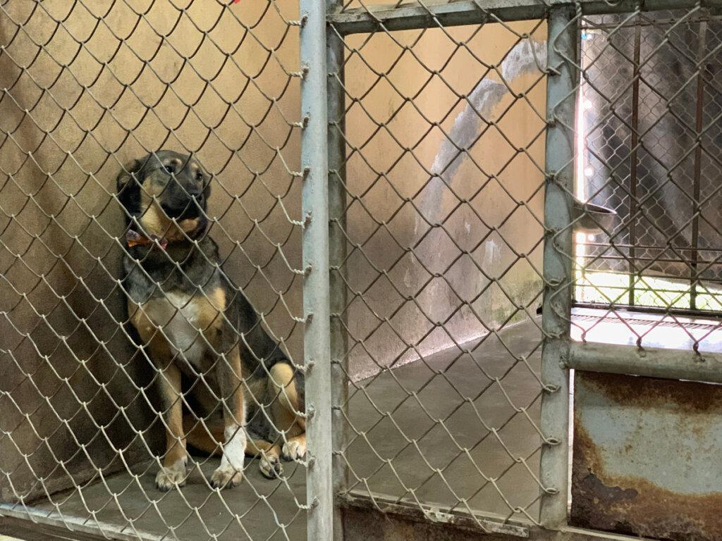 Cientos de personas piden adoptar perros con las cuerdas vocales cortadas