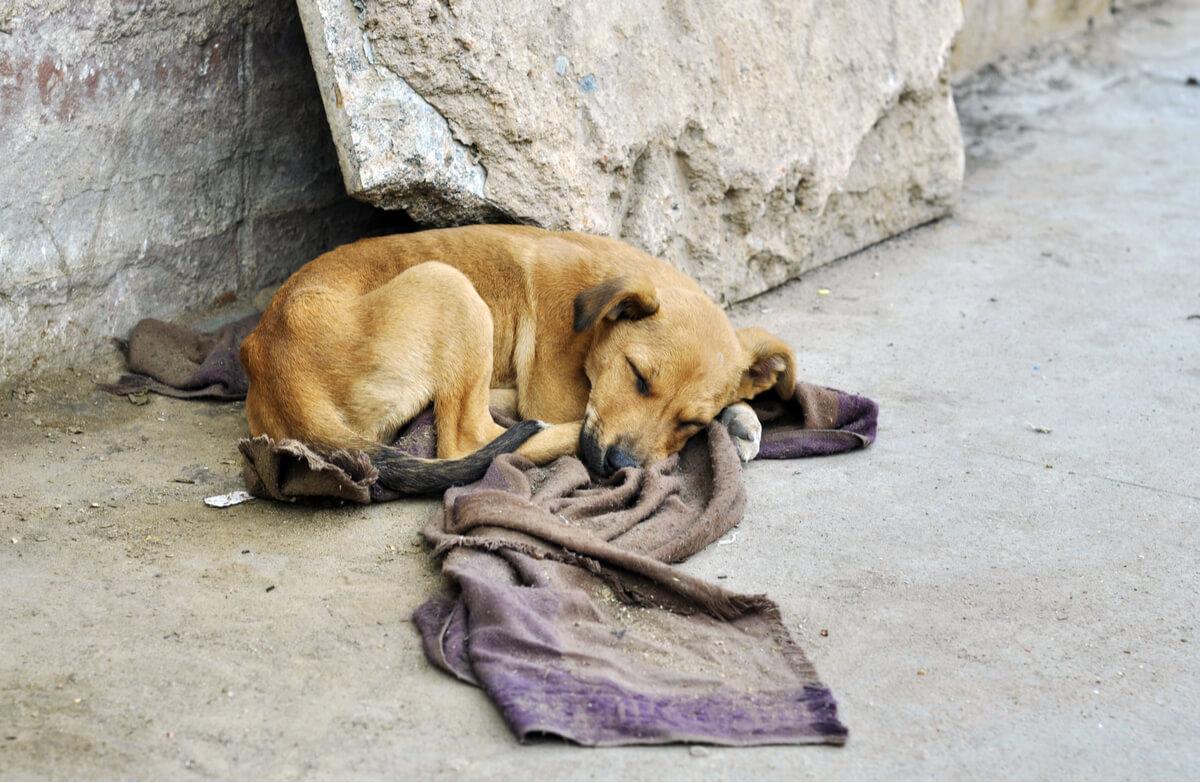 Un chien avec une couverture dans la rue.