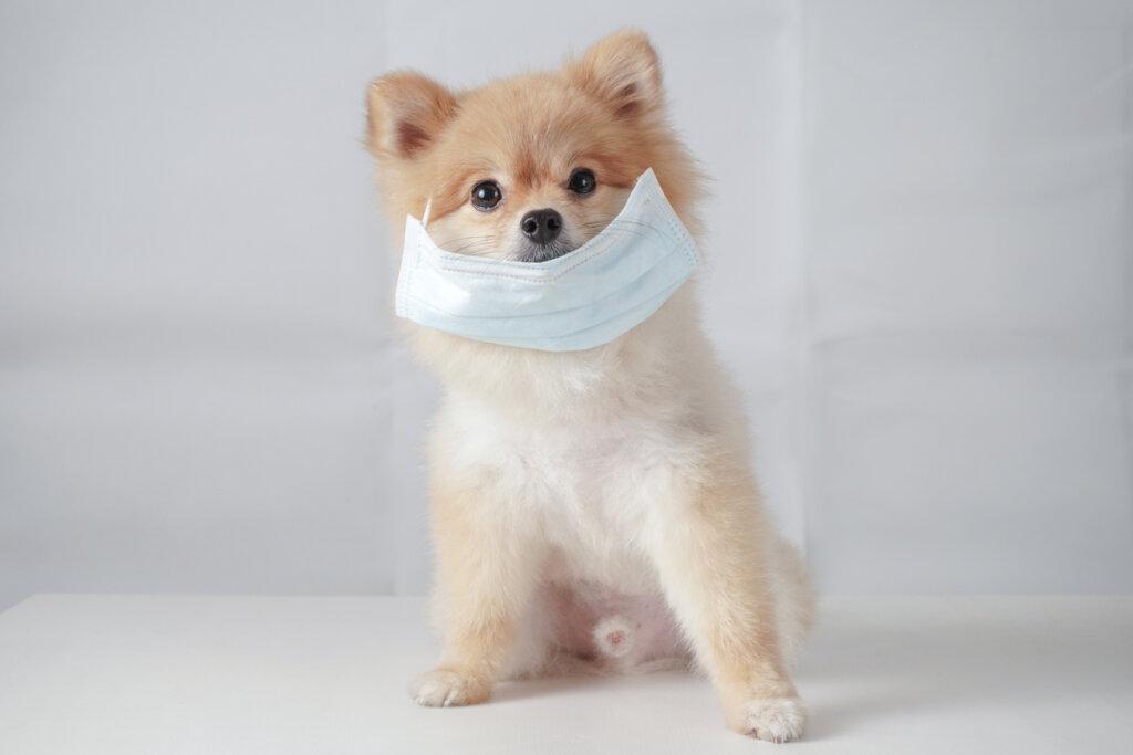 Herpesvirus canino: todo lo que debes saber