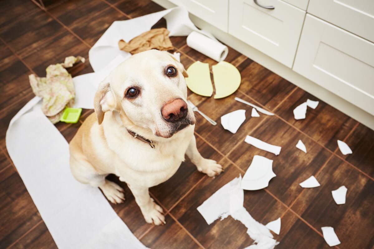 Un perro rompe platos.