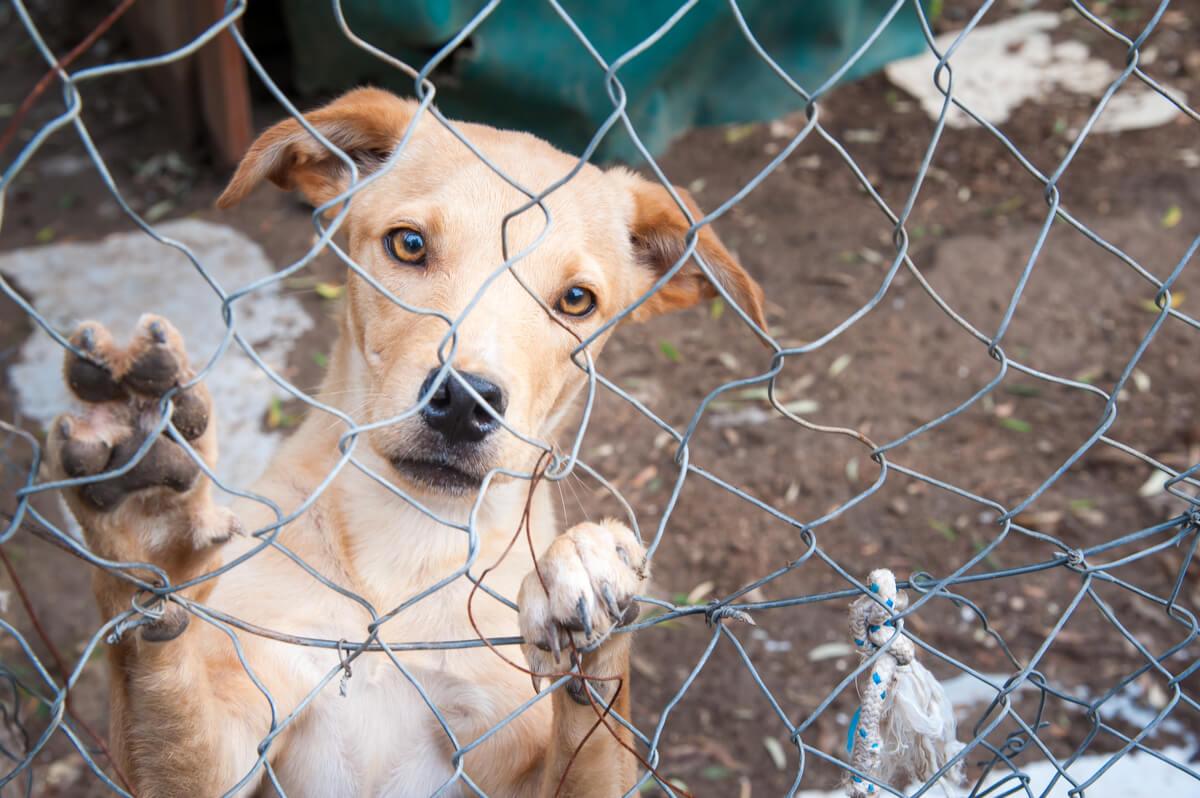 Los perros sin hogar se multiplican con los años.