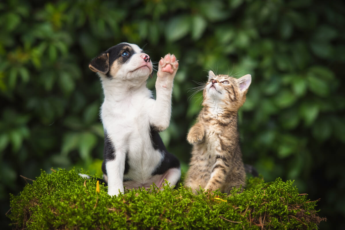 Los tumores en glándulas sebáceas en perros y gatos pueden ser graves.
