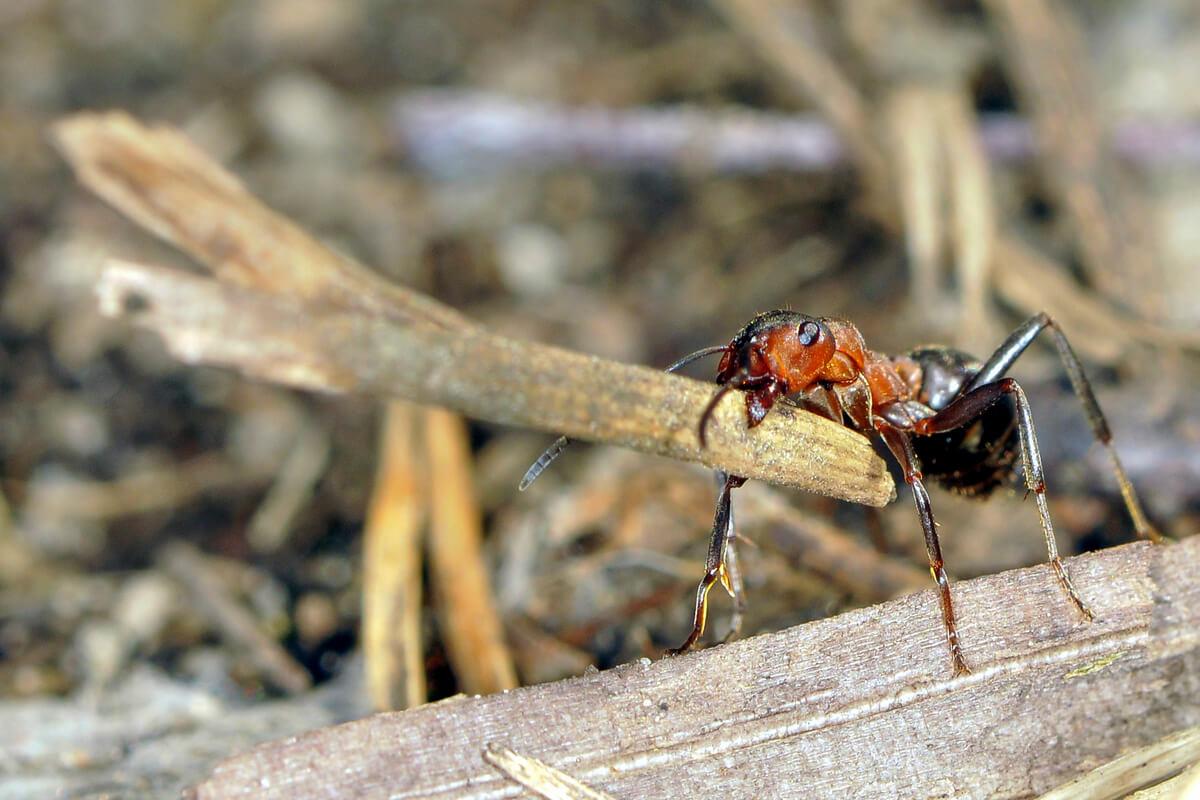 An ant.