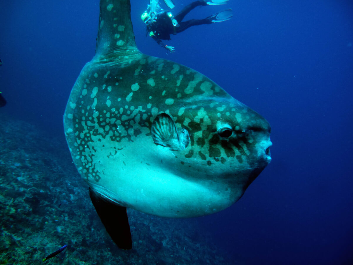 One of the endangered fish.