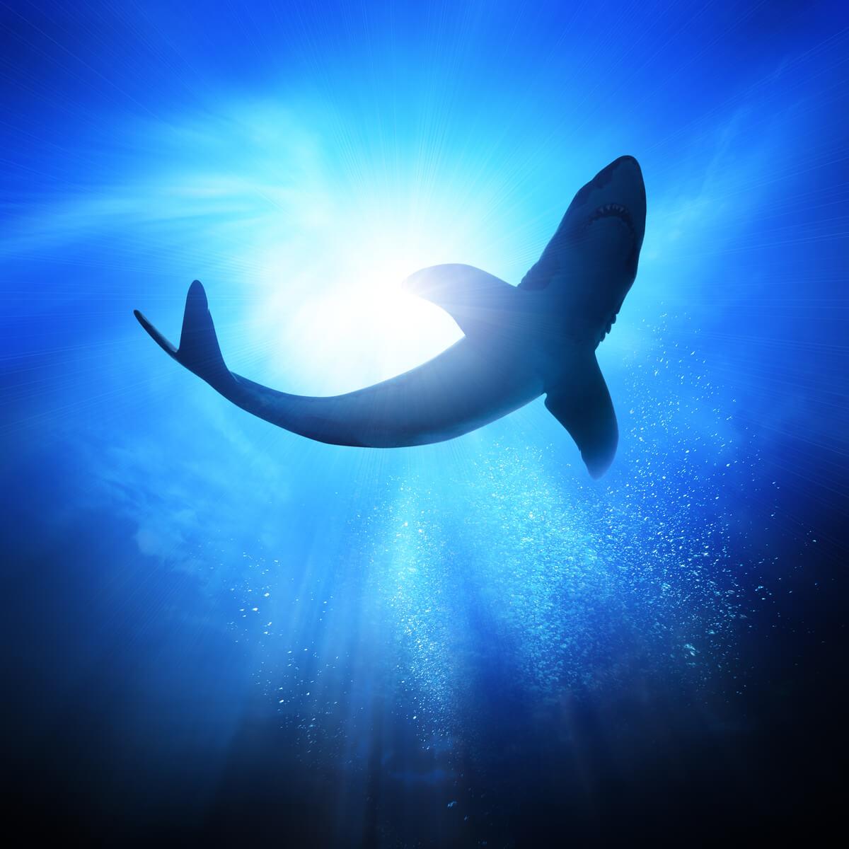 En sort haj i dybet.