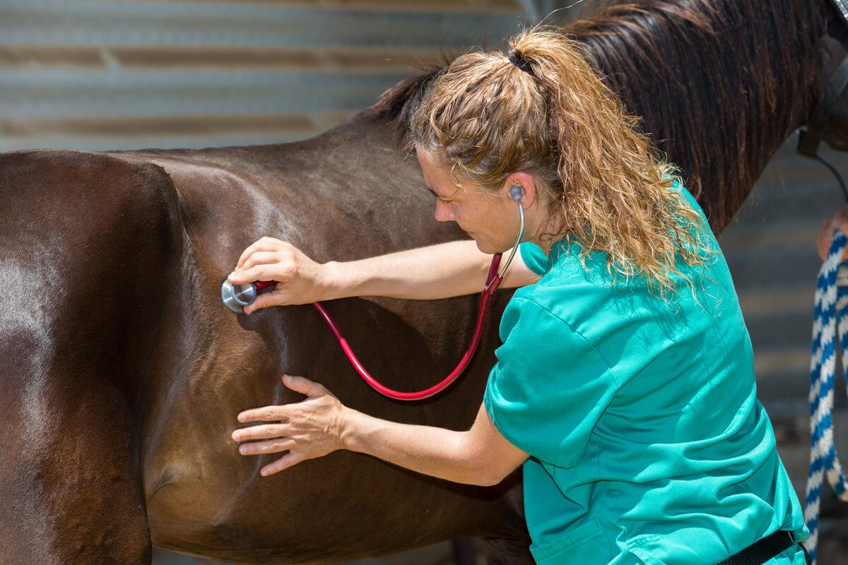 Los tumores en caballos pueden ser graves.