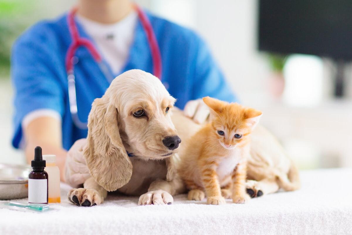 Tumores de glándulas sudoríparas en mascotas: síntomas y tratamiento