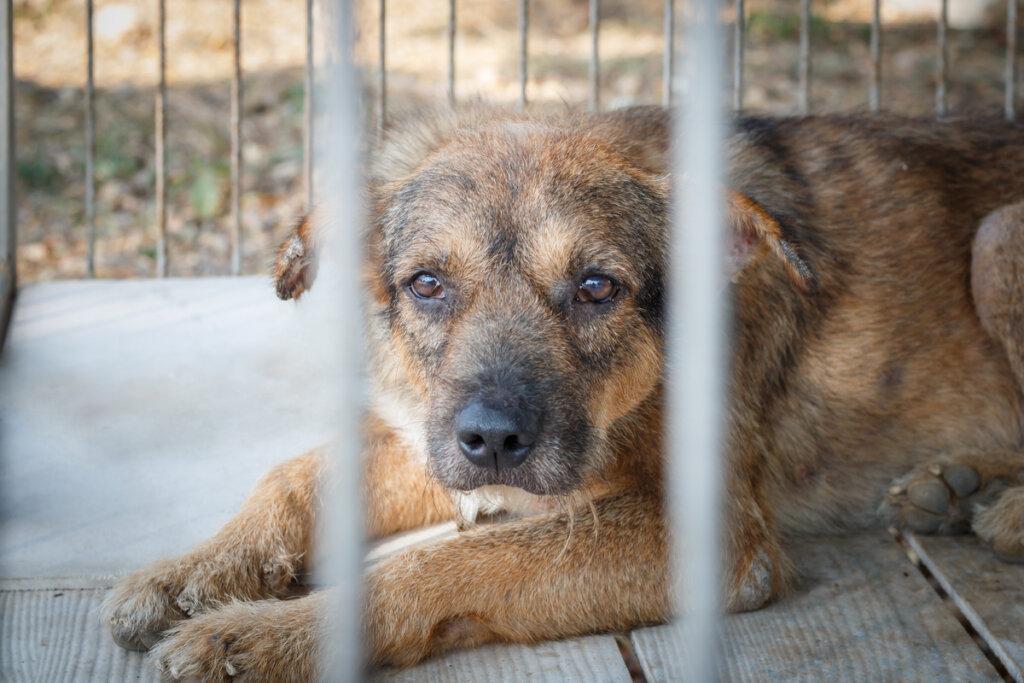 ¿Cómo identificar a un maltratador animal?