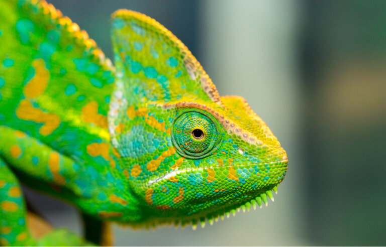 Enfermedad ósea metabólica (EOM) en reptiles: síntomas y tratamiento