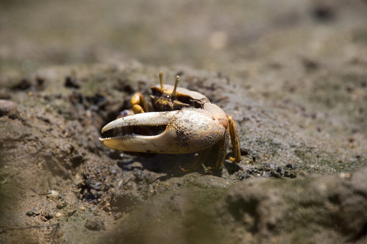 Los cangrejos son animales con caparazón.
