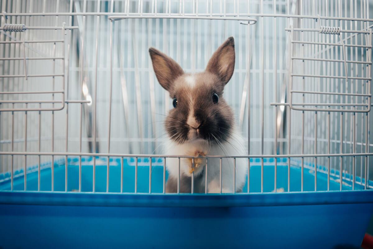 Un conejo sale de una jaula.