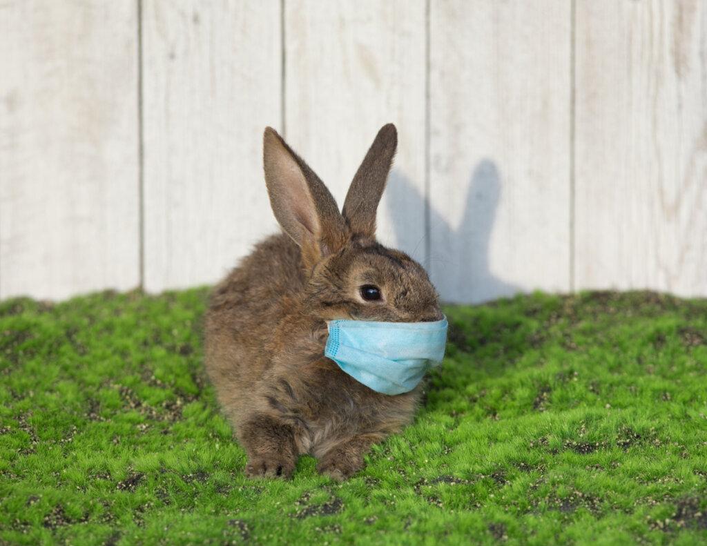Tularemia en conejos: todo lo que debes saber
