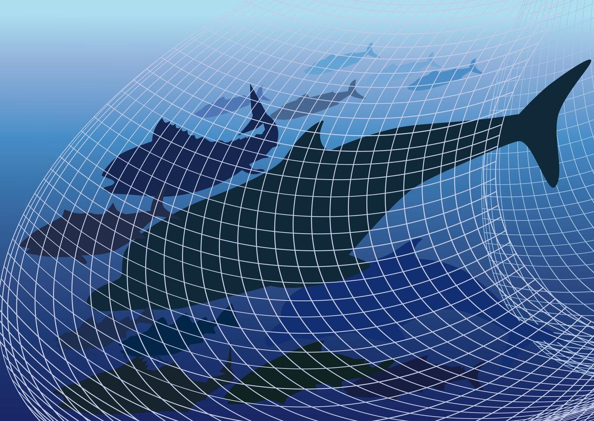 Los seres humanos somos los mayores depredadores del delfín.