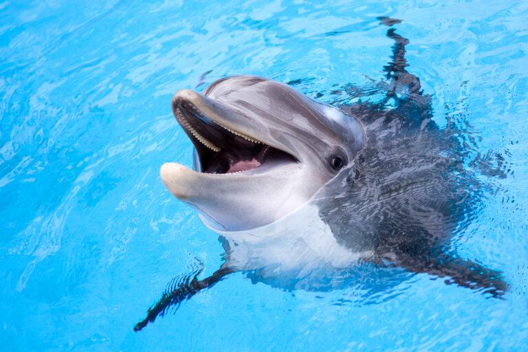 ¿Cuáles son los depredadores del delfín?