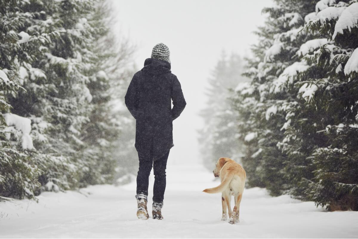 Pasar el invierno con tu perro puede ser muy entretenido.