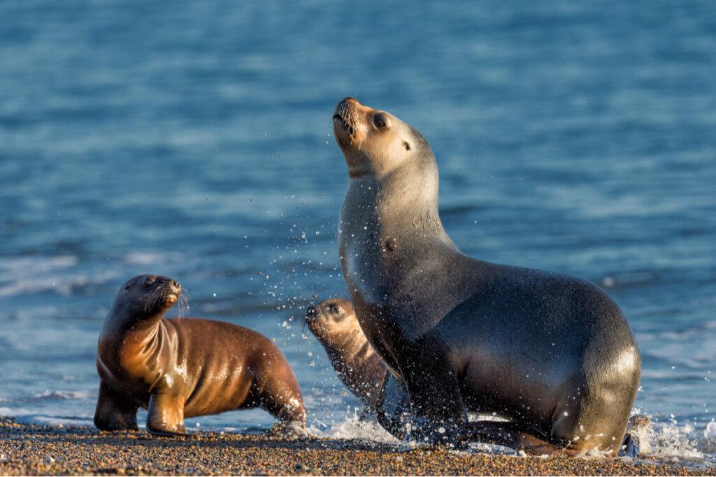 Cierran una calle para proteger al león marino de Nueva Zelanda