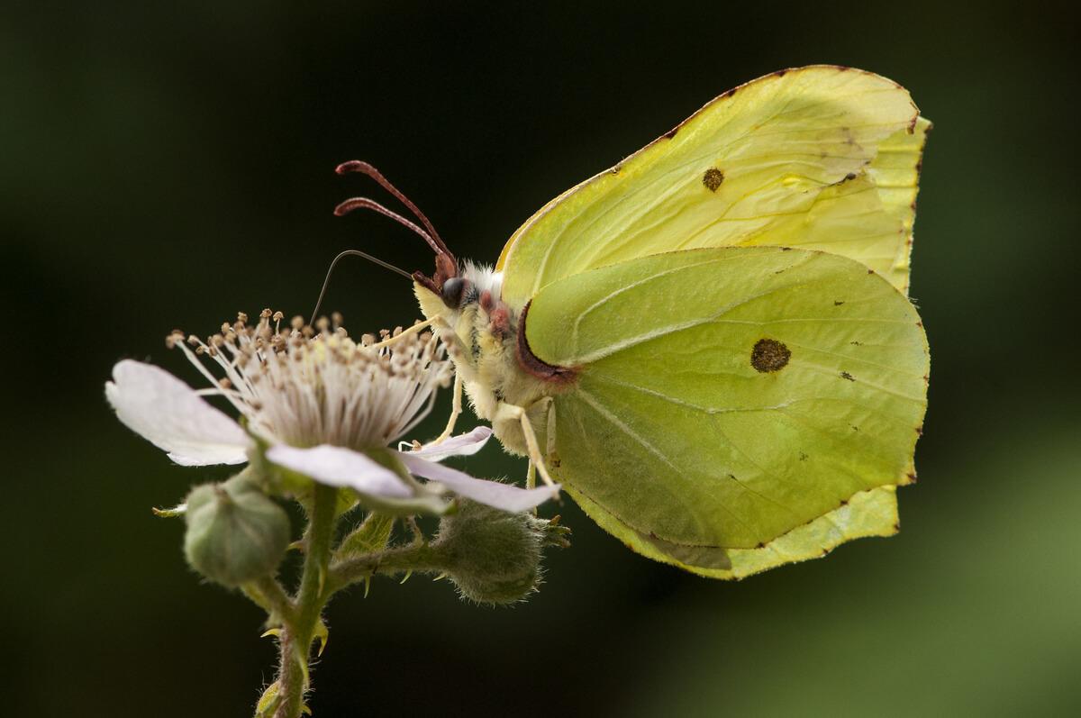 Una mariposa.
