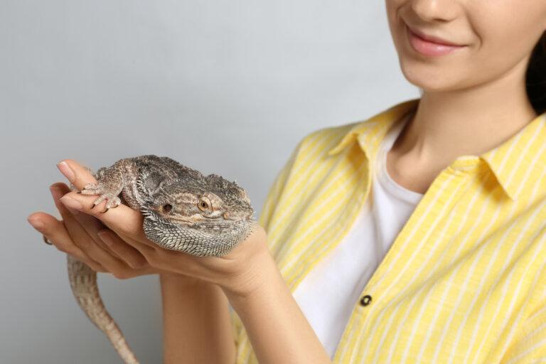 Mascotas exóticas y zoonosis asociadas