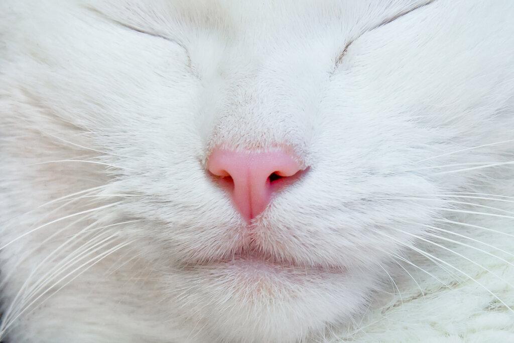 Consejos para limpiar la nariz a un gato