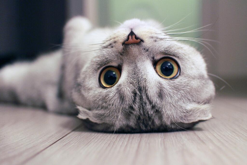 4 consejos para limpiar los ojos de un gato